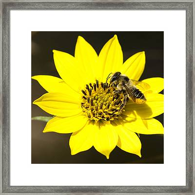 The Gatherer Framed Print by Carrie Cranwill