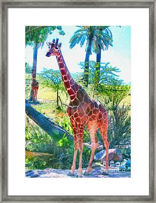 The Gentle Giraffe Framed Print