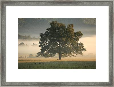 Framed Print featuring the photograph The Giving Tree by Doug McPherson