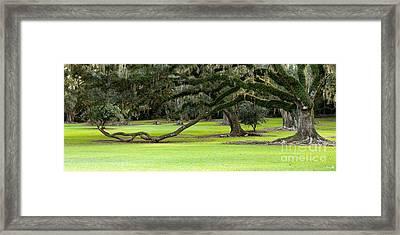 The Giving Tree Framed Print by Scott Pellegrin