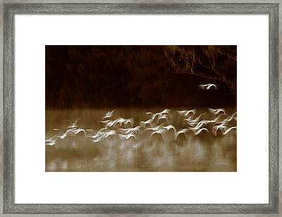 The Glades Framed Print by Bruce J Robinson
