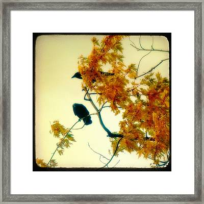 The Glow Of Autumn Framed Print by Gothicrow Images