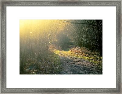 The Glowing Path Framed Print by Justin Albrecht