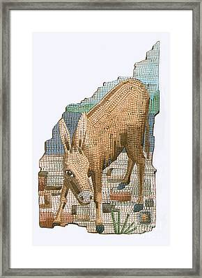 The Golden Ass Framed Print by Photo Researchers