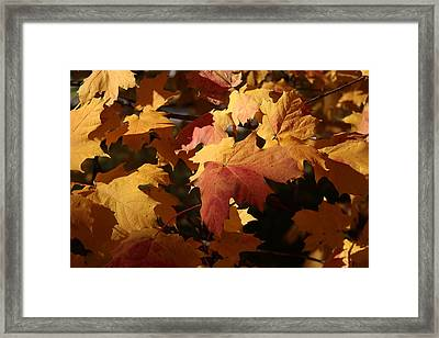 The Golden Days Of October Framed Print by Lyle Hatch