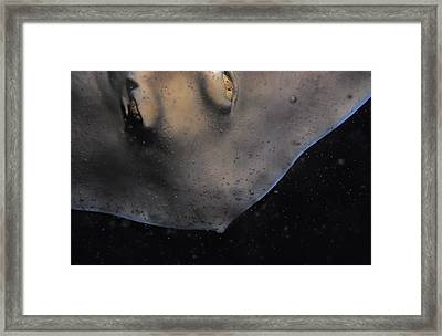 The Golden Eyes Of A Sparcely Spotted Framed Print