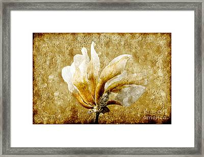 The Golden Magnolia Framed Print by Andee Design