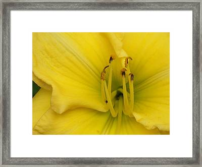 The Golden Ones Framed Print by Wide Awake Arts