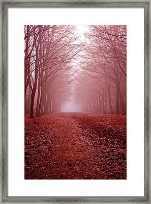 The Golden Path Framed Print by Aidan Minter