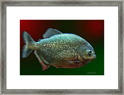 The Golden Piranha Framed Print