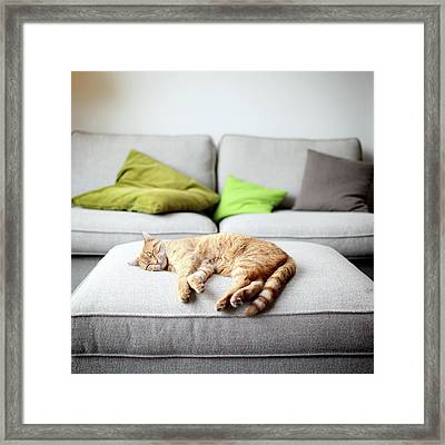 The Good Life Framed Print by Marcel ter Bekke