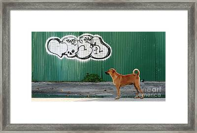 Framed Print featuring the photograph The Graffiti Artist by Nola Lee Kelsey