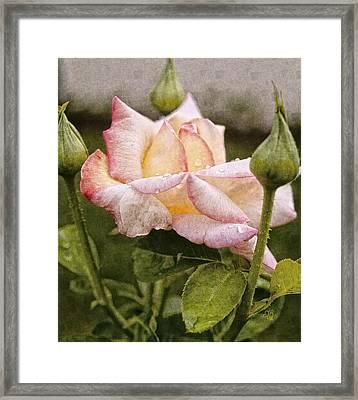 The Grand Trine Framed Print by Barbara Middleton