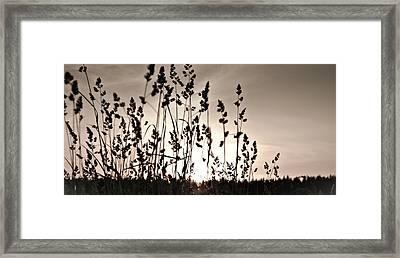 The Grass At Sunset Framed Print