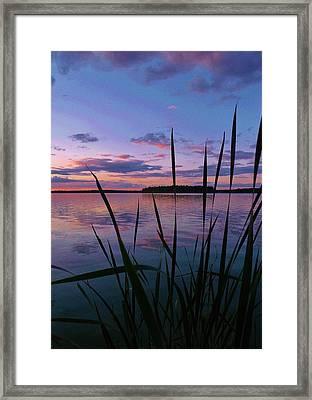 The Grass Framed Print by Virginia Lei Jimenez