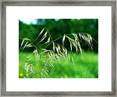 Framed Print featuring the photograph The Grass Seeds by Steve Taylor