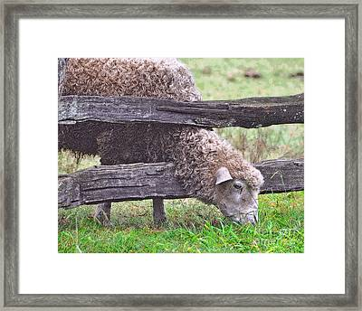 Framed Print featuring the photograph The Grass...on The Other Side by Lydia Holly