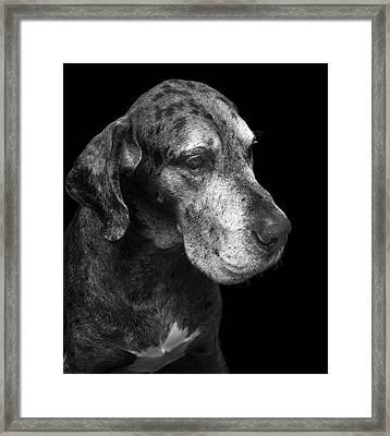 The Great Dane Framed Print by Marc Huebner