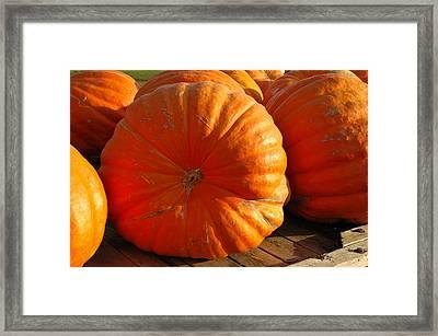 The Great Pumpkin  Framed Print by LeeAnn McLaneGoetz McLaneGoetzStudioLLCcom