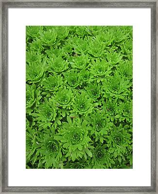 The Green Crowd Framed Print