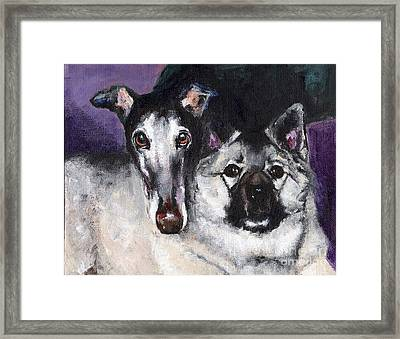 The Grey And The Keeshond Framed Print