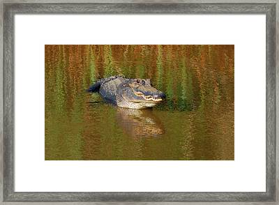 Framed Print featuring the photograph The Grin by Kathy Gibbons
