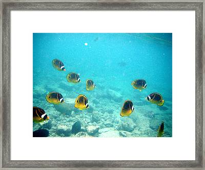 The Group Framed Print by Karen Nicholson