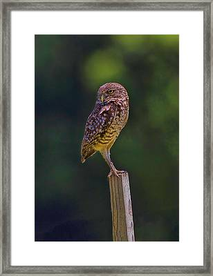 Framed Print featuring the photograph The Guardian by Anne Rodkin