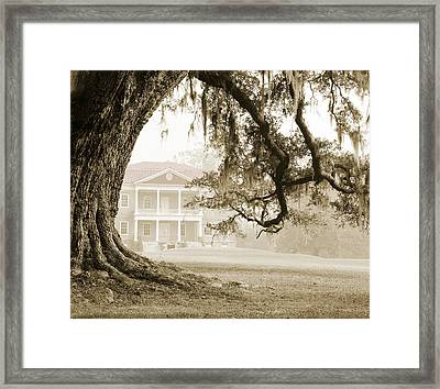 The Guardian Tree Framed Print