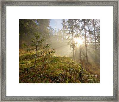 The Guardians Framed Print by Idaho Scenic Images Linda Lantzy