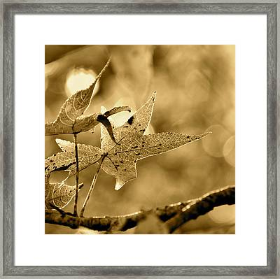 The Gum Leaf Framed Print