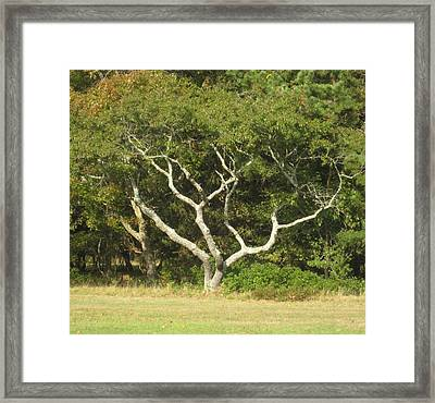 The Hand Of Nature Framed Print
