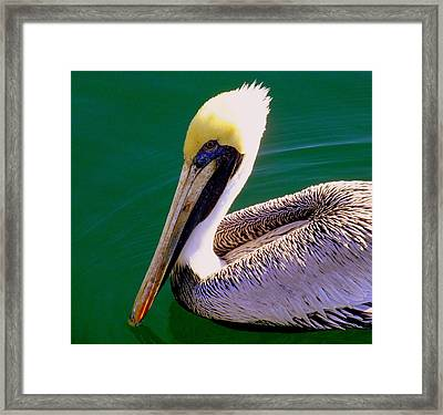 The Happy Pelican Framed Print