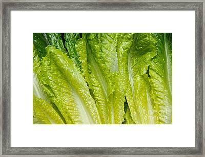 The Heart Of Romaine Framed Print