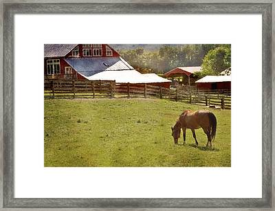 The Horse In The Barn Yard Framed Print by Kathy Jennings