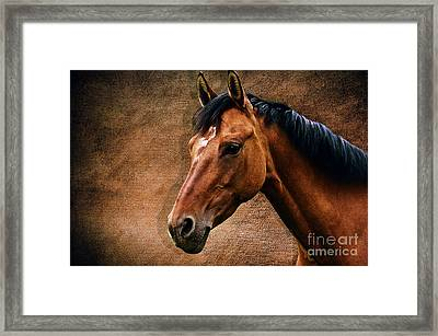The Horse Portrait Framed Print by Angela Doelling AD DESIGN Photo and PhotoArt