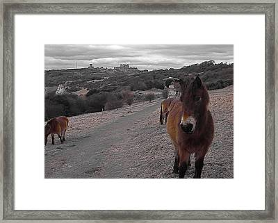The Horses Of Dover Framed Print
