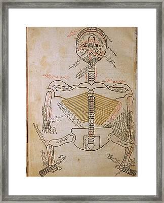 The Human Skeleton, From Mansurs Framed Print by Everett
