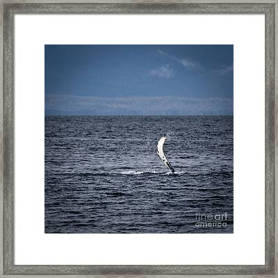 The Humpback Wave Framed Print by Darcy Michaelchuk