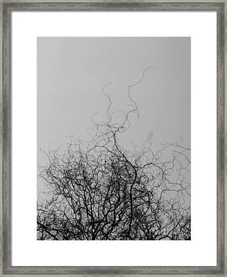 Framed Print featuring the photograph The Idea Tree by Luis Esteves