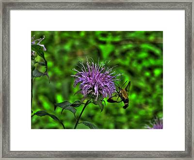 The Imposter Framed Print by William Fields