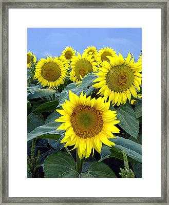 The In Crowd Framed Print by James Steele