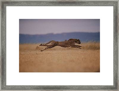 The Incredible Speed Of An African Framed Print by Chris Johns