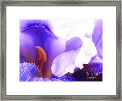 The Intimate Iris Framed Print by Jerome Stumphauzer