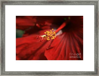 The Intoxication Of Love Framed Print by Sharon Mau
