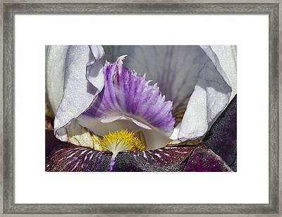 Framed Print featuring the photograph The Iris by David Lester