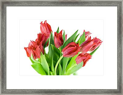 Framed Print featuring the photograph The Isolated First Spring Tulips Background by Aleksandr Volkov