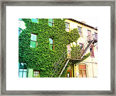 Framed Print featuring the photograph The Ivy And The Irony by MJ Olsen