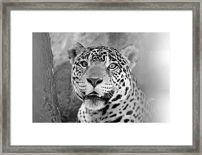The Jaguar Spots You Framed Print