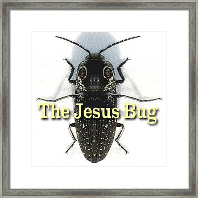 The Jesus Bug Framed Print by Terry Lynch